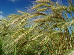 Epagri estima que safra de inverno será positiva em Santa Catarina