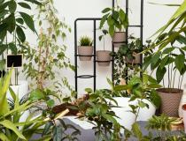 Plantas ganham ainda mais espaço na casa com a pandemia