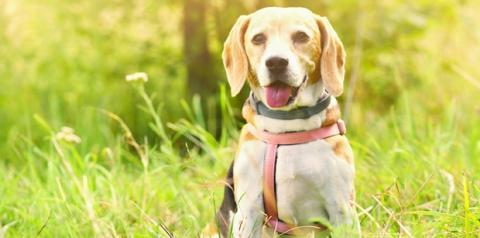 Adestrar cachorro – pesquisa revela que perfil dos donos influencia os animais