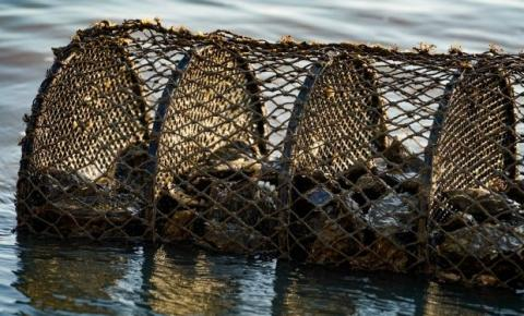Secretaria da Agricultura anuncia interdição de áreas de cultivo de moluscos em Palhoça