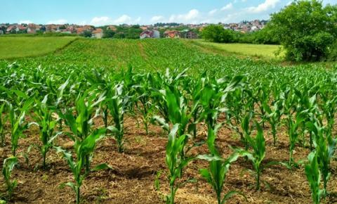Exportações do agronegócio caem em janeiro