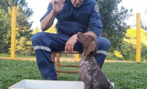 Corpo de Bombeiros tem duas novas raças de cães em treinamento e mais um filhote de Labrador em SC