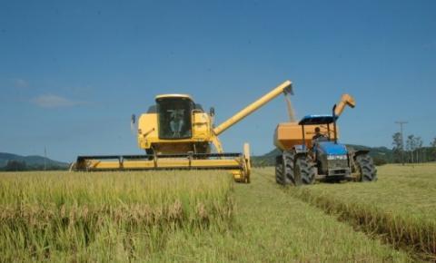 Apesar de redução na área cultivada, safra de arroz permanece estável em SC