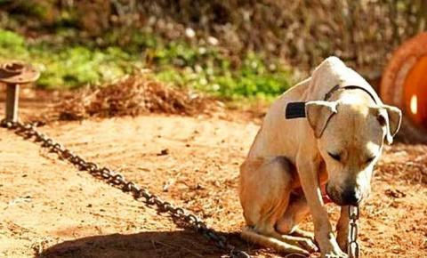 Agora é lei em São José: agressores de animais deverão arcar com as despesas do tratamento